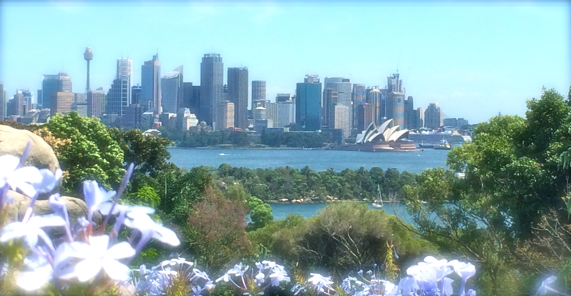 incredible Sydney for Nature and Bubbles